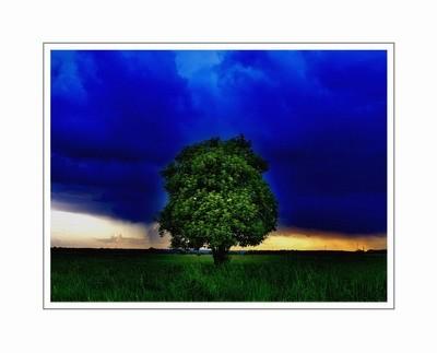 drzewo2.jpg